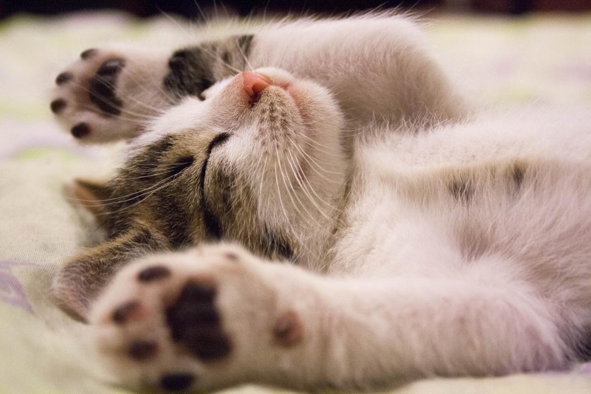 Is Sleep Overrated?